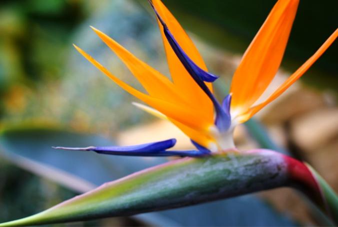 væksthusene, botanisk have, aarhus, colourfull ink, aarhusblogger